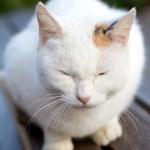 猫の名前「世界で一番素敵な言葉」