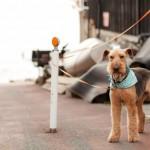 長いリードで犬を散歩させる人「噛みついた時は全て飼い主の責任」