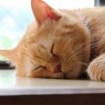 寝苦しい夜の快眠方法シンプル9「猛暑の夏をぐっすり涼しく安全に!」